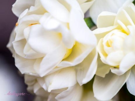 Flower Stock-18
