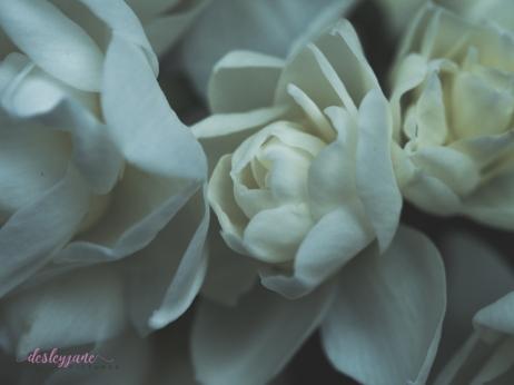 Flower Stock-19