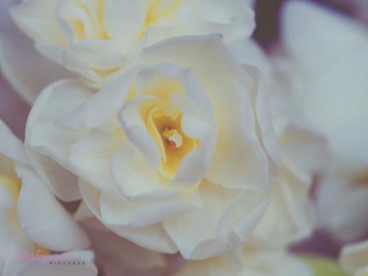 Flower Stock-20