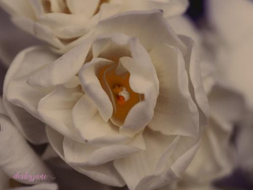 Flower Stock-21