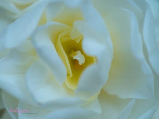 Flower Stock-23