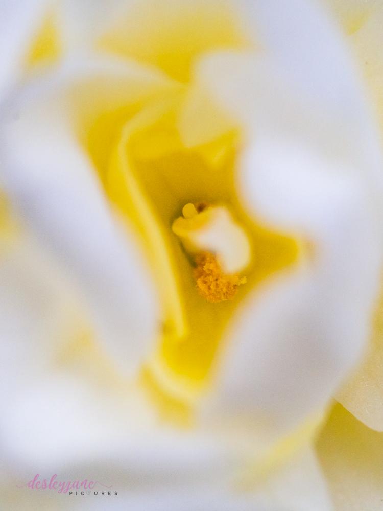 Flower Stock-24