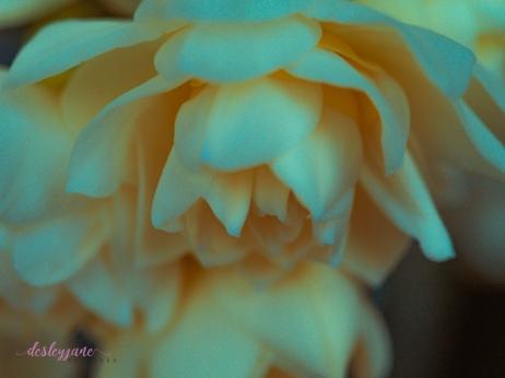 Flower Stock-25