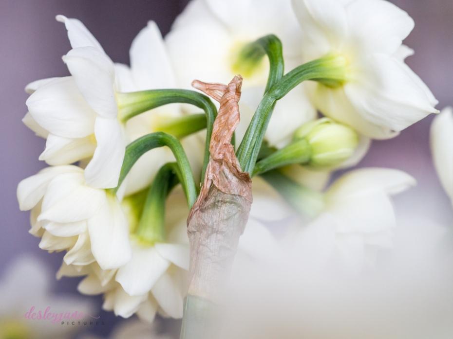 Flower Stock-28