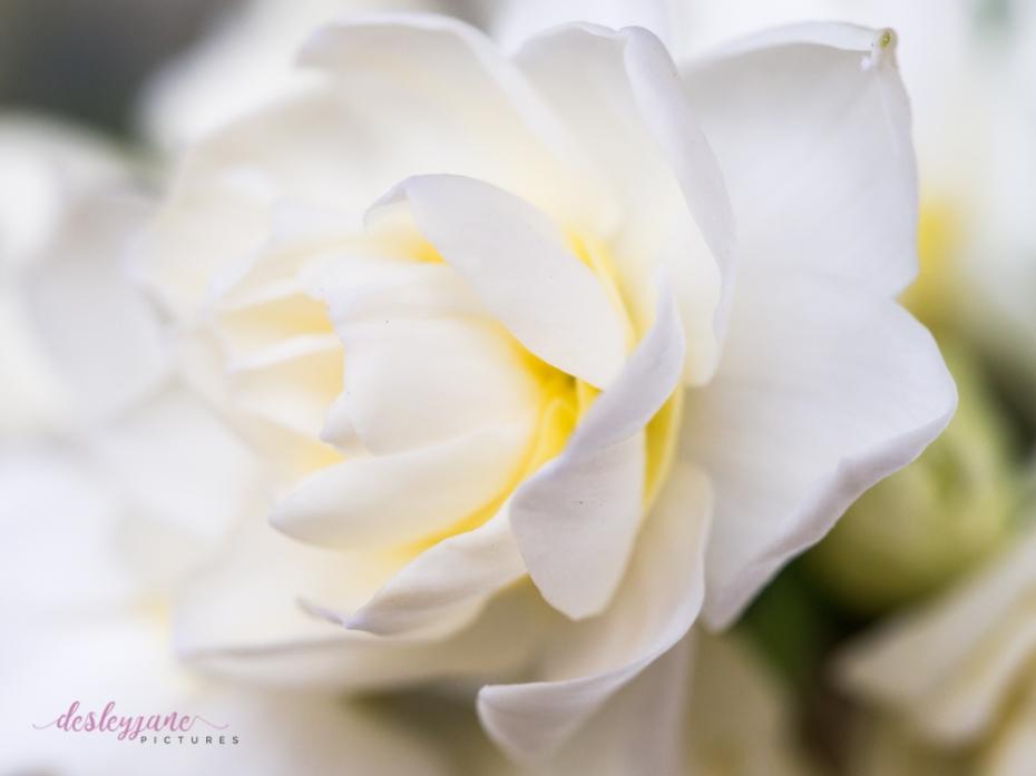 Flower Stock-3