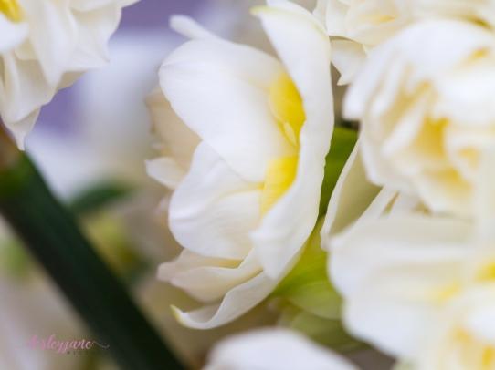 Flower Stock-34