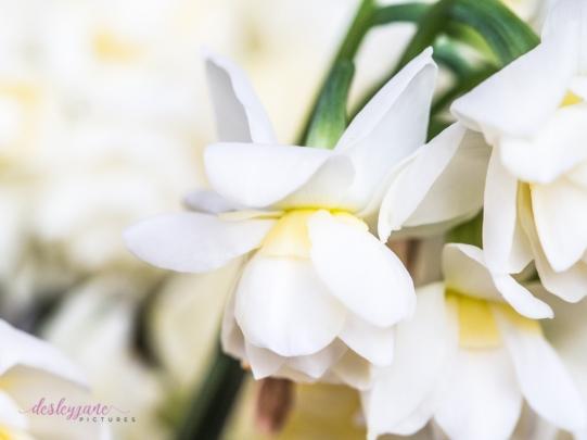 Flower Stock-36