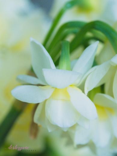 Flower Stock-38