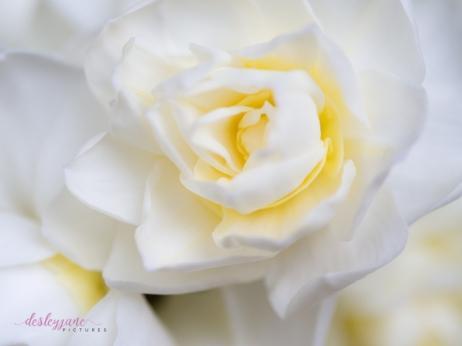 Flower Stock-4