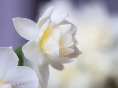 Flower Stock-41