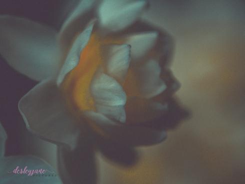 Flower Stock-42