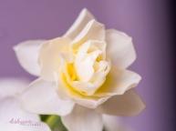 Flower Stock-43