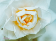 Flower Stock-45
