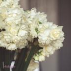 Flower Stock-46