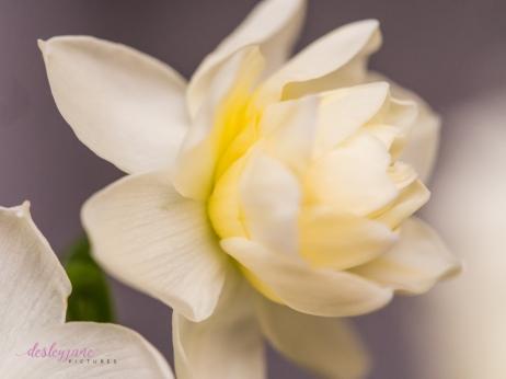 Flower Stock-5