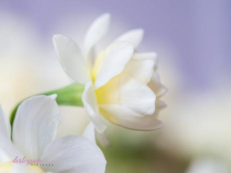Flower Stock-7