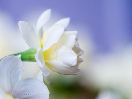 Flower Stock-8