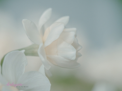 Flower Stock-9