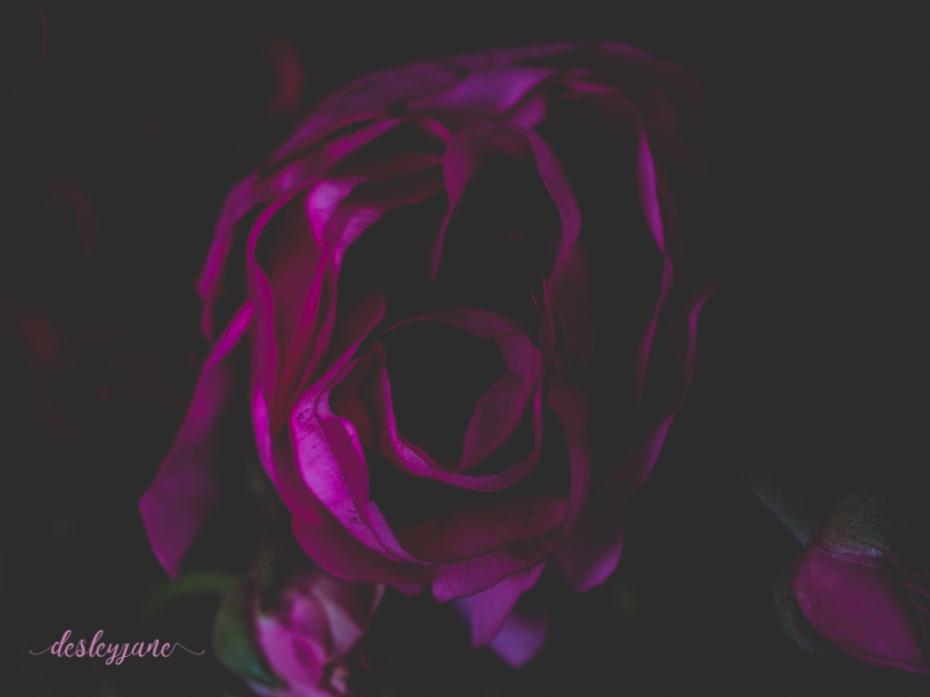 Poppies-27