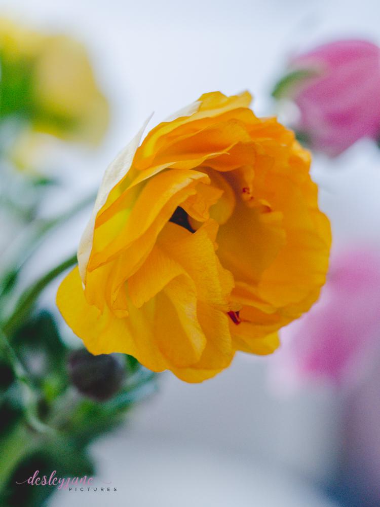 Poppies-30
