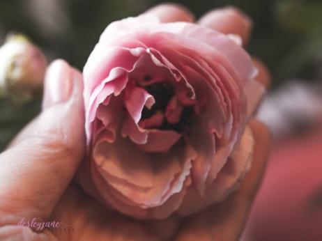 Poppies-35