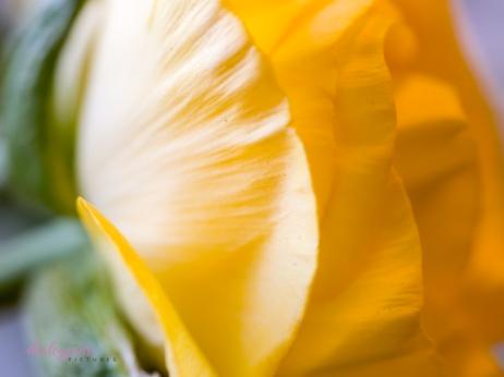 Poppies-36