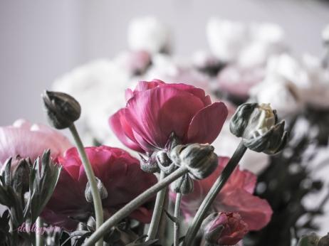 Poppies-38