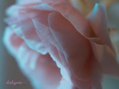 Poppies-50