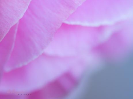 Poppies-63