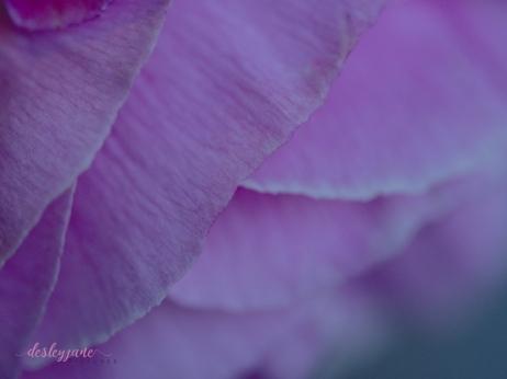 Poppies-65