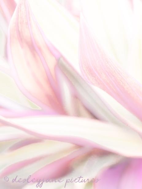 StripeMePink_LR_edit1-13