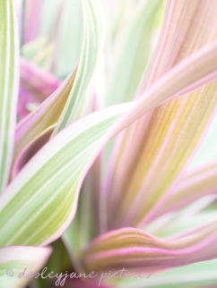 StripeMePink_LR_edit2-11