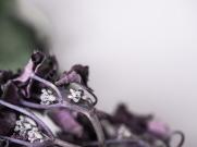 hydrangea_pink_decay-10