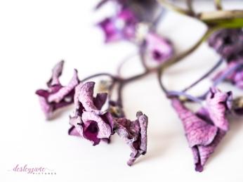 hydrangea_pink_decay-11