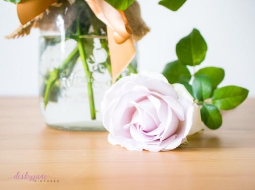 lavender roses-19