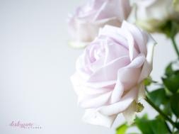 lavender roses-2
