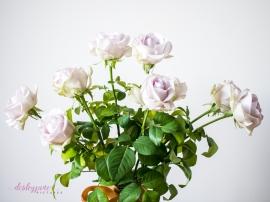 lavender roses-22