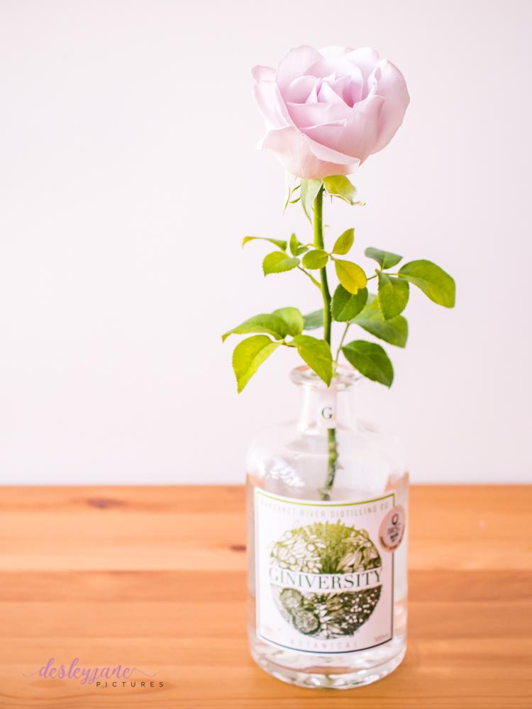 lavender roses-31