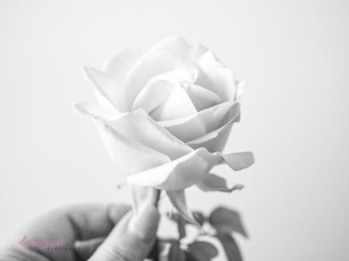 lavender roses-51