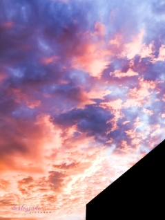 pinkskies_australiaday-8