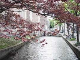 TheHague_Rotterdam_Delft+-60